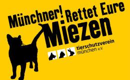 jl_tierschutzverein_miezen